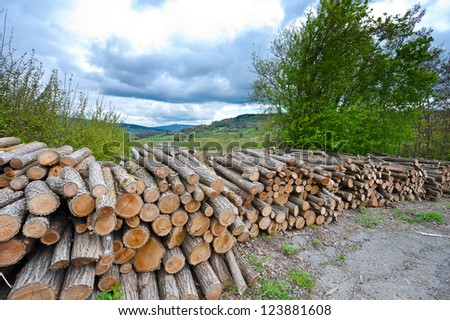 Sawed Firewood Dropped High Up in the Italian Alps