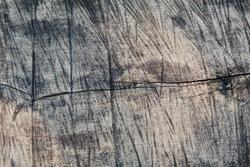 Sawed tree texture