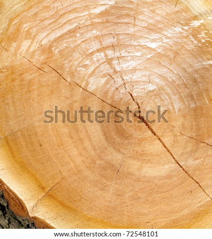 sawed wooden texture, close up with texture