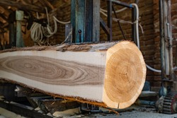 Sawmill cutting log process of making wood planks lumber and timber industry