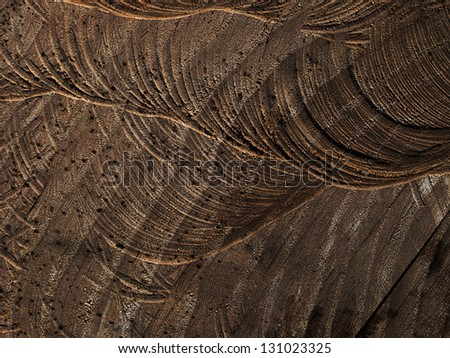 Sawn wood background texture with rings