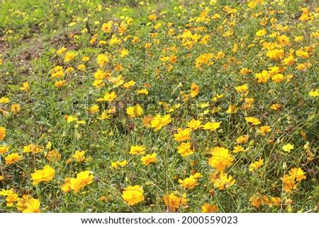 saya tidak tau ini bunga apa tapi mereka lucu Stok fotoğraf ©