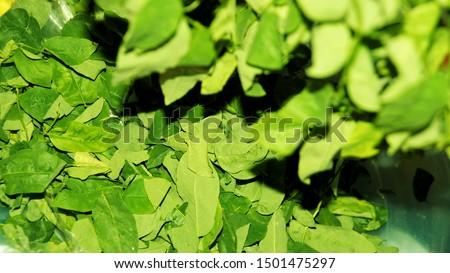 sayur manis, pucuk manis, sayur sabah, mani cai, greens from Borneo #1501475297
