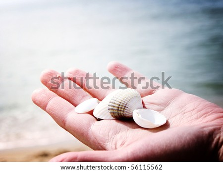 Scallop in a woman hands.