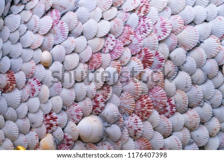Scallop sea shells are beautifully attached on the concrete wall one by one in a pattern of an overlapping of edges; the decoration represents a local wisdom of people in the eastern part of Thailand. #1176407398