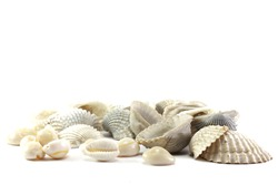 Scallop shells and cowrie shells on a white background