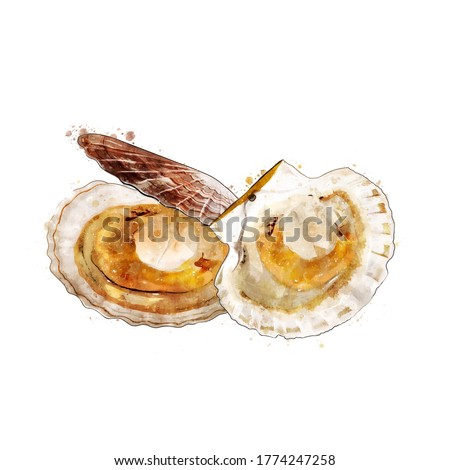 Scallop, watercolor isolated illustration of bivalve mollusks. Foto stock ©