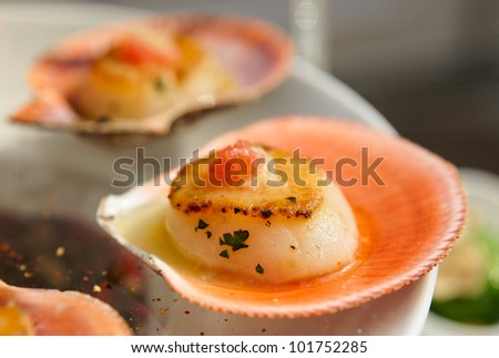 Scallops on banquet table, close-up