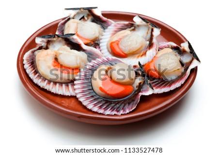 Scallops (zamburiñas) fresh, raw and clean on clay plate