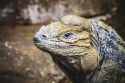 scaly lizard skin resting in the sun