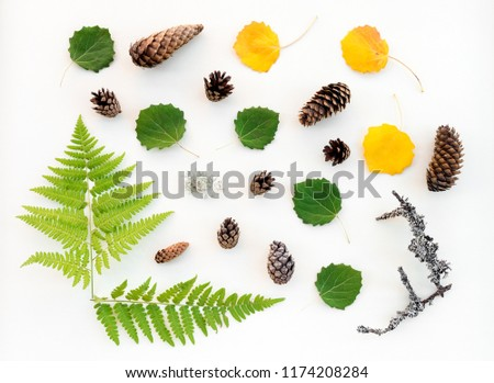 Scandinavian forest flat lay. Summer and autumn leaves, fern, fir cones and mossy twigs. #1174208284