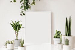 Scandinavian room interior with white mock up photo frame on the table with beautiful plants in differents cement  and design pots. White walls. Modern and floral concept of shelfs. Template.