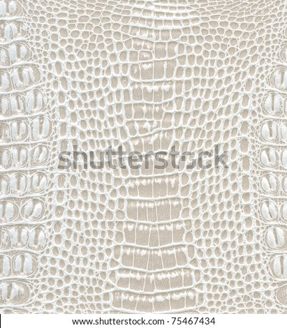 Crocodile skin texture Images and Stock Photos - Page: 3