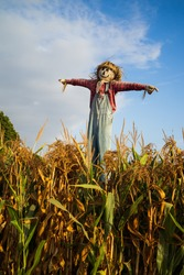 Scarecrow above the cornfield smiles and looks content with his lot in life