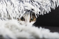 Scared cat hiding at home