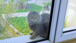 Scared cat with wide open eyes stuck on window sill outside second floor