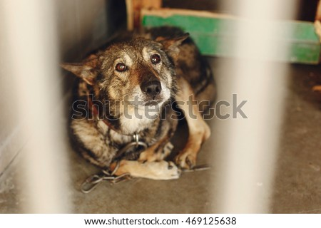 Scared dog in shelter cage with sad crying eyes emotional moment adopt me concept space for - Dogs for small spaces concept ...