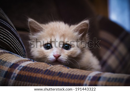Scared kitten hiding at home.