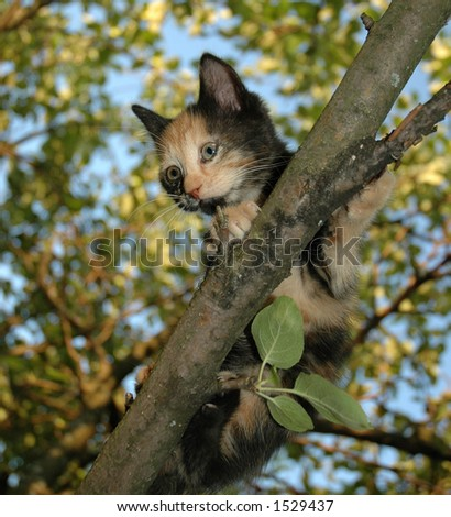 Scared kitten on apple-tree