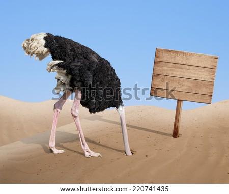 scared ostrich burying head in sand near standing blank wooden signboard - Shutterstock ID 220741435
