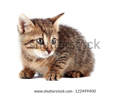 Scared striped kitten on a white background