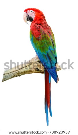 scarlet macaw  colorful bird...