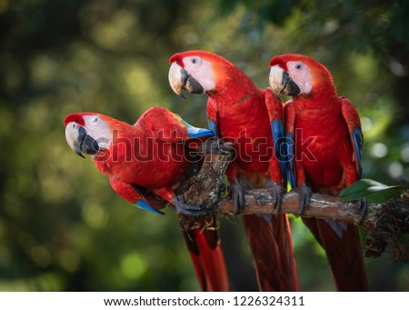 Scarlet Macaw Costa Rica Photo Expedition