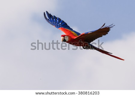 Shutterstock Scarlet Macaw passing by. A lovely scarlet macaw shows off its colours to good effect as it flies past the camera.