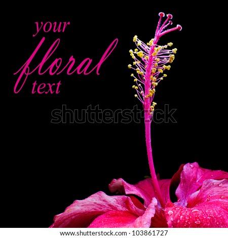 Scarlet Red Hibiscus Flower