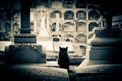 Scary cat on a cemetery, between two graves. Niche background. Picture with vignette and low saturation. Halloween and Day of the Dead.