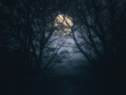scary forest at night with full moon