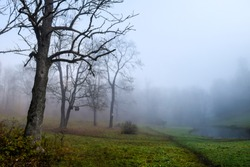 Scary forest mist in autumn fog at Halloween. Mysterious forest mist in Halloween autumn fog scene. Autumn forest mist panorama. Mystery forest trees in autumn fog landscape