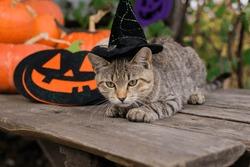 Scary halloween pumpkin jack-o-lantern and kitten on the table.