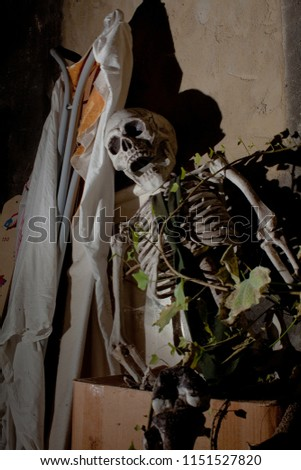 scary helloween life size plastic skeleton with open mouth sits at an attic on a paper box next to an ironing board that is coverd with a white but dirty blanket, an ivy branch is growing into it