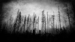 Scary horror forest wallpaper, dark spooky landscape