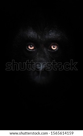 Scary orange luminous eyes on the black face of a monkey in a black night, a frightening look that embodies fears and phobias. #1565614159