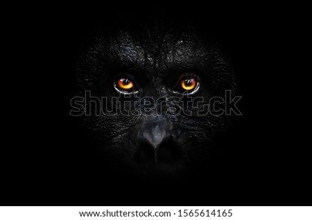 Scary orange luminous eyes on the black face of a monkey in a black night, a frightening look that embodies fears and phobias. #1565614165
