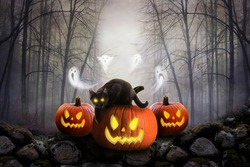 Scary Pumpkins And Dark Forest with ghost and black cat , Halloween Background.