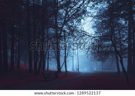 Scary road in the paranormal world. Mystical Strange forest in a fog with red leaves. Background mystic atmosphere. Dark mysterious park. Mysterious fairy forest with red flowers lit by moonlight.