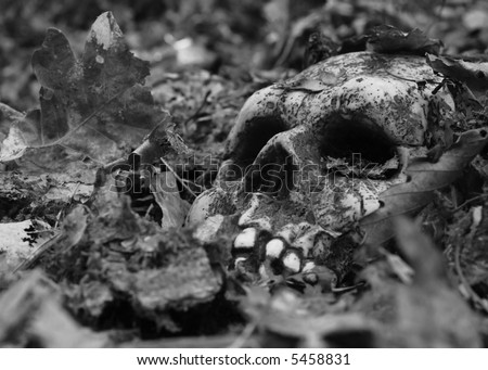 scary skull in a pile of leaves