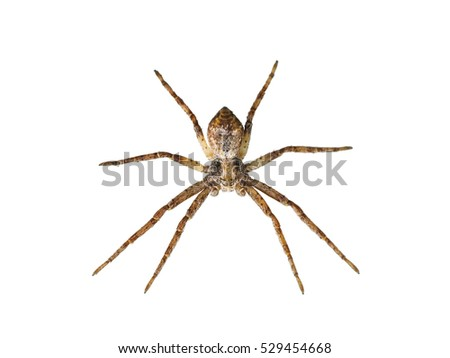 Scary Spider Isolated on White