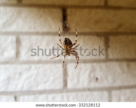 Scary spider watching the house. Zoom in and you will see all details of the spider.\ Nice to show to kids, too.