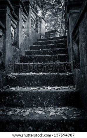 scary stone stairs in the forrest