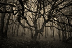 scary tree in forest sepia