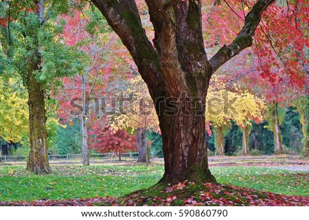 Scattered autumn leaves on the ground around a tree trunk with other colorful fall trees in the background in Lake Sammamish State Park in Western Washington near Seattle. - Shutterstock ID 590860790