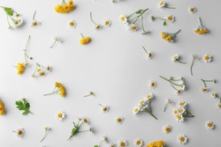 Scattered chamomile flowers on light background
