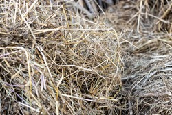 Scattered stalks of dry straw pile close up background