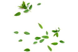 scattering of green fresh leaves isolated on white background