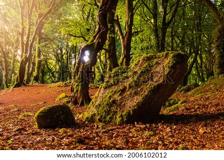 Scene in a forest park, beautiful trees and big stone covered with moss. Warm sunrise light . Barna woods, Galway city, Ireland Stock fotó ©