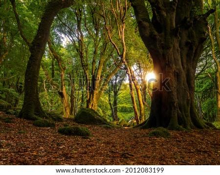 Scene in a forest park beautiful trees, Warm sunrise light . Barna woods, Galway city, Ireland Stock fotó ©